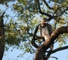 Kruger Park Safari - Martial Eagle